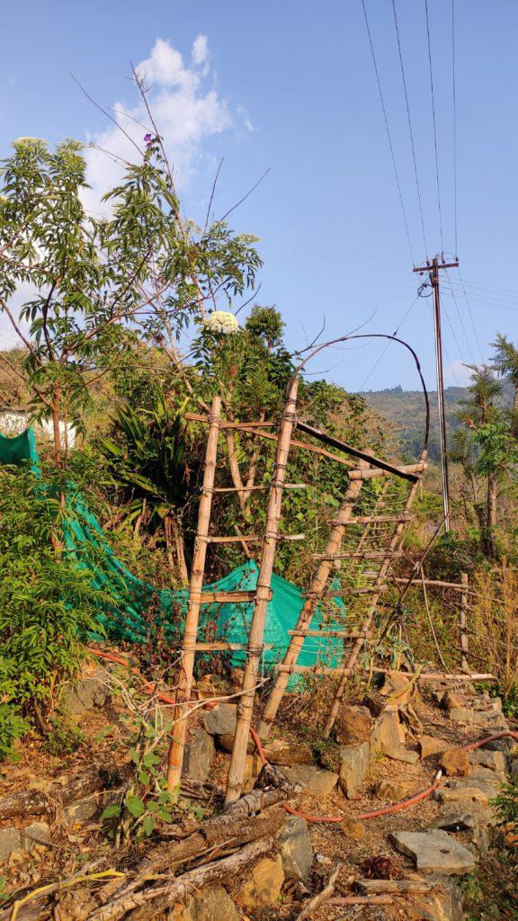 A garden restart will include a plan for this damaged trellis!